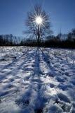 inspiraci drzewo s Zdjęcia Royalty Free