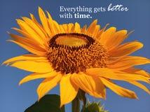 Inspiracyjna wycena Everything dostaje lepszy z czasem Z pięknym uśmiechniętym słonecznikowym okwitnięcia zbliżeniem b??kitne nie zdjęcie stock