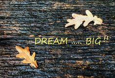 Inspiration for life with the word DREAM BIG. Inspirational quote for life with leaves of tree and dropped of rain on leaf stock photography