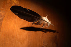 Inspiration Concept. Feather flying above wooden surface under beam of light Royalty Free Stock Photography