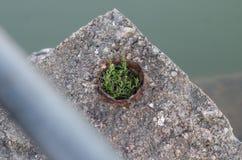 Inspiration från naturen royaltyfri fotografi