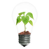 Inspiration. Light bulb with sprout inside idea inspiration. Object white isolated Royalty Free Stock Images