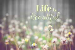 Inspiration quote :. ` Life is beautiful` on flower field background ,Motivational typographic Stock Image