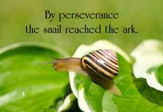 Inspirational citaat stock afbeeldingen