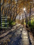 Inspirational conceptual landscape view with sunlight through trees. And shadows on trail in autumn. Typography. Yellow text. A grateful heart is a magnet for royalty free stock images
