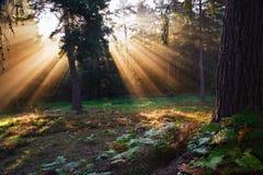 Inspirational dageraadzon die door bomen is gebarsten royalty-vrije stock foto