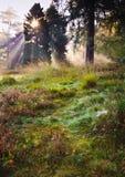 Inspirational dageraadzon die door de bomenHerfst is gebarsten stock afbeeldingen
