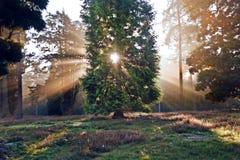 Inspirational dawn sun burst through trees
