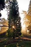 Inspirational dawn sun burst through trees Stock Images