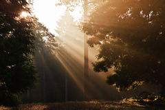 Inspirational dawn sun burst through trees Autumn Royalty Free Stock Image