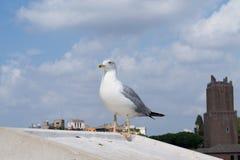 Inspirational image of european herring gull (Larus argentatus) stock photos