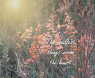 Inspirational and motivation quote on blurred grass flower background. The smallest things warm the heart royalty free stock photo