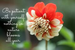 Free Inspirational Motivational Quote - Be Patient With Yourself, Nothing In Nature Blooms All Year. Words Of Wisdom With Flower. Royalty Free Stock Photo - 213524705