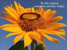 Inspirational motivational quote- Be the reason someone smiles today. With beautiful big & single sunflower blooming in closeup