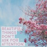 Inspirational motivational quote `beautiful things don`t ask for attention`. On pink flower with blue sky royalty free stock photos