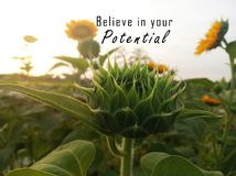 Free Inspirational Motivational Quote - Believe In Your Potential. With Baby Sunflower Ready To Bloom In The Garden. Motivation Words Stock Photo - 166458330