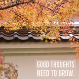 Inspirational motivational quote `Good thoughts need to grow`. On Autumn leaves with wall royalty free stock images