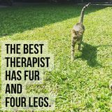 Inspirational Motivational Quote `the Best Therapist Has Fur And Four Legs` Stock Photography