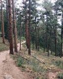Inspirational Nature Trail stock photo
