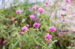 Inspirational positieve citaat ` het beste moet nog komen ` op de purpere achtergrond van de grasbloem Stock Foto