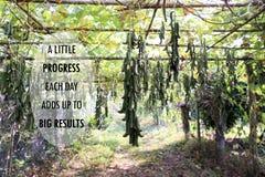 Inspirational positieve citaat ` Wat vooruitgang elke dag klopt aan grote resultaten ` op Mucuna pruriens gelijkstroom Bomenachte Royalty-vrije Stock Foto's