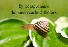 Free Inspirational Quote. Stock Images - 44500814