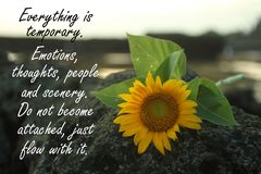 Inspirational quote - Everything is temporary. Emotions, thoughts, people and scenery. Do not become attached just flow wit it. With beautiful sunflower head royalty free stock photo