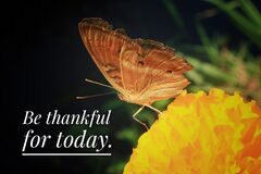 Inspirational quote - Thankful for today. With butterfly on a flower. Gratefulness and gratitude concept with nature.