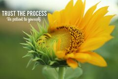Free Inspirational Quote - Trust The Process. Be Patient To Yourself. With Fresh Sunflower Start To Bloom In The Morning In The Garden Stock Images - 176588434