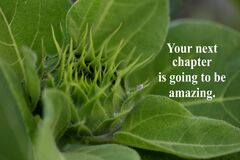 Free Inspirational Quote - Your Next Chapter Is Going To Be Amazing, With Young Baby Sunflower Ready To Bloom As Illustration. Royalty Free Stock Images - 175910379