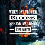 Inspirational Quotes When one flower blooms spring awakens everywhere, positive, motivational, inspiration. Inspirational Quotes saying When one flower blooms royalty free stock photo