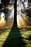 Inspirational sunburst through trees in forest Royalty Free Stock Photography