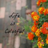 Inspirational Typographic Quote - Life is Colorful Stock Photos