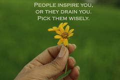 Free Inspirational Words - People Inspire You, Or They Drain You. Pick Them Wisely. With Two Beautiful Little Daisy Flowers In Hand. Stock Image - 156052831
