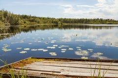 Inspirationsommar sjö Arkivfoto