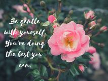 Inspire Motivation Life Quote on flowers background. Inspiration Motivational Life Quotes on pink rose in pastel color background design stock images
