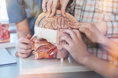 Inspired致力了学习人脑的学生 免版税库存照片