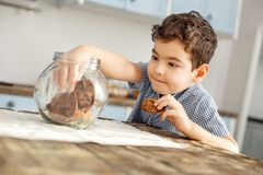 Inspired little boy eating some cookies. I love cookies. Handsome delighted little dark-haired boy sitting at the table and eating a cookie and taking some more Royalty Free Stock Photography