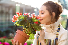 Inspired woman florist smelling flowers of begonia in greenhouse Stock Image
