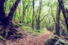 Inspirerande härligt grönt skoglandskap Fotografering för Bildbyråer