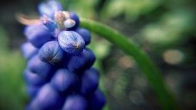 Inspirerande natur Royaltyfria Foton