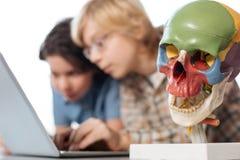 Inspiring little scholars studying in school lab