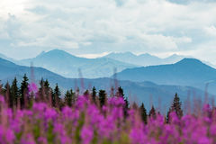 Inspiring Mountains Landscape, beautiful summer day in Tatras, P Royalty Free Stock Image