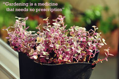 Inspiring quotes on gardening Stock Photography