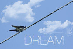 Inspiring Sparrow Dream Stock Images