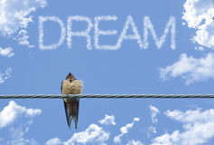 Inspiring Sparrow Dream Royalty Free Stock Photos