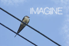 Inspiring Sparrow Imagine Stock Photography