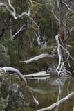 Inspirujący naturę w górze Odpowiada parka narodowego, Tasmania obraz stock