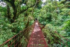 Inställd bro på den Monteverde molnskogen, Costa Rica royaltyfri fotografi