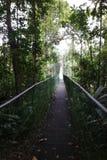 Inställd gångbana i regnskogen Royaltyfri Fotografi